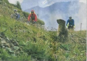 Mountainbiker werden beobachtet